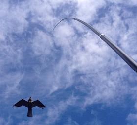 Bild på Fågelskrämma Drake komplett med 6 m mast och lina